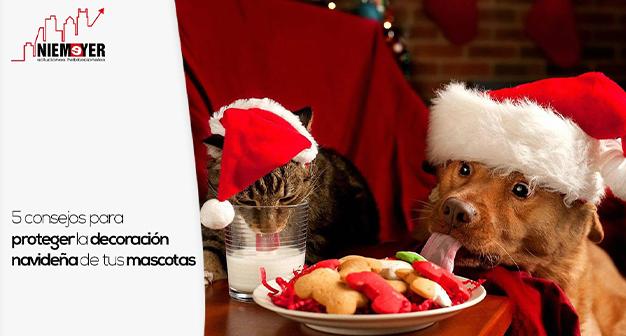 cuidar navidad mascotas